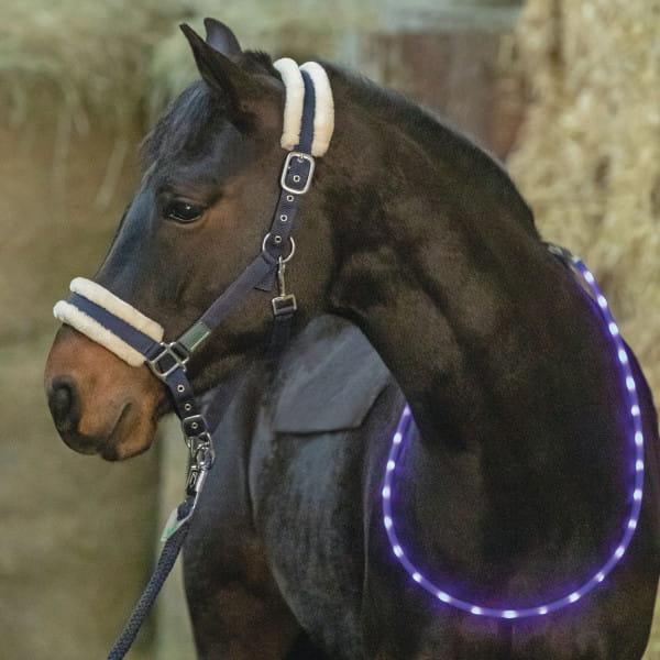 LED Leuchthalsring für Pferde