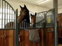 Deckenhalter für Pferdedecken