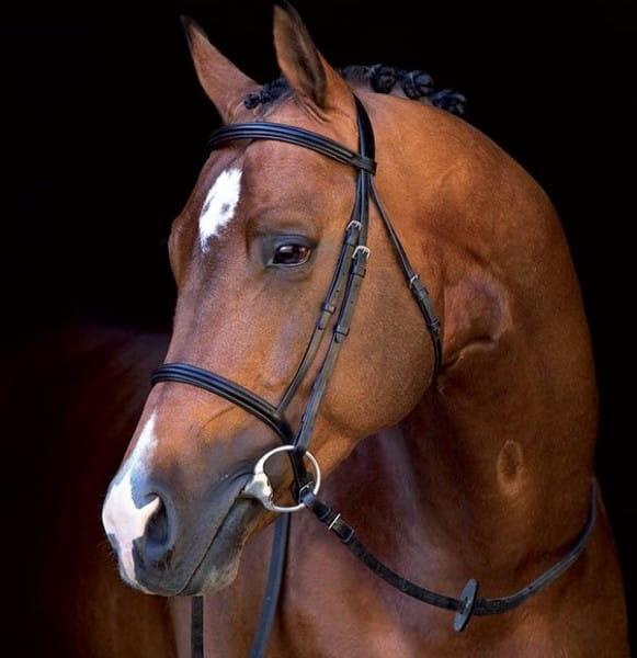 Horseware Mio Bridle